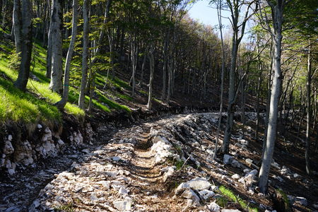 mountin: Dirt road in the forest in mountain area of Montenegro