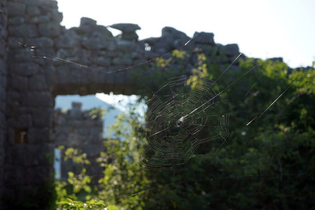 spider net: Spider net and ruins of Saint Andrey fortress in Montenegro