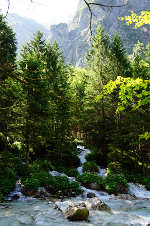 geen: Mountain river in the forest in Alps in Slovenia