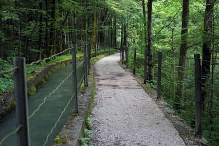 chanel: Footpath near the chanel with water in the forest Stock Photo