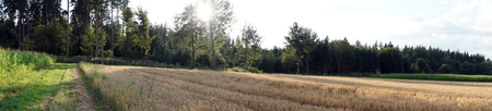 Panorama with sun and wheat field in Germany