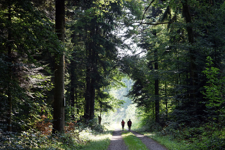 walk in: People walk in the forest in Gemany Stock Photo
