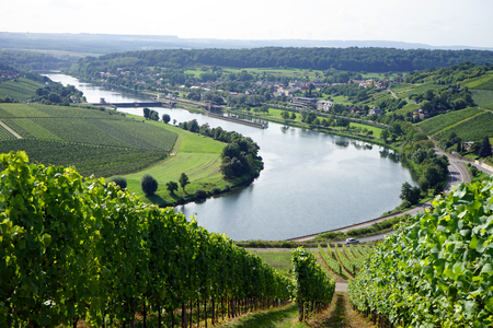 an agricultural district: Vineyard on the river Mosell in Luxrmbourg