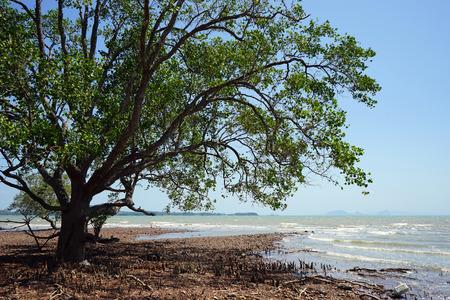 Big tree on the coast of Ko Lanta island in Thailand Stock Photo