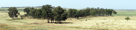 Eucaliptus grove in Galilee, Israel Stock Photo - 102885459