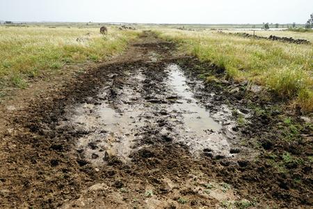 Wet dirt road in Galilee, Israel
