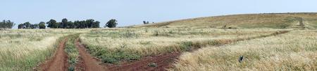 Two tracks on the field Foto de archivo