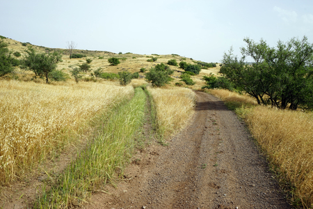 Dirt road near Kinnereth lake in Galilee, Israel Stock Photo