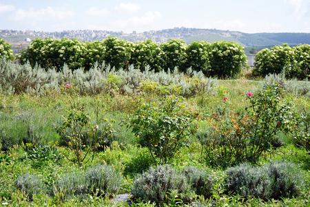Garden near Nazareth in Galilee, Israel Stock Photo - 102895140