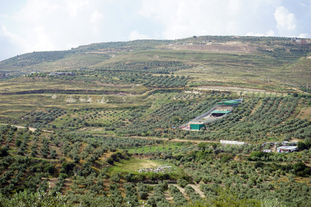 Olive groves on the slope near Nazareth in Israel Stock Photo - 102907656