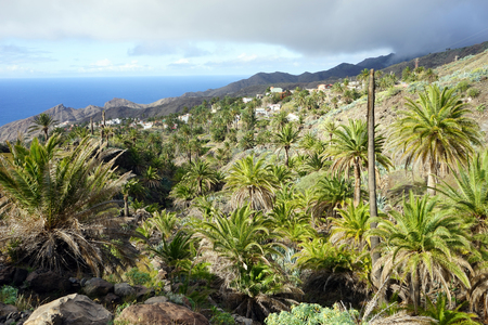 Palm grove on the La Gomera island Reklamní fotografie