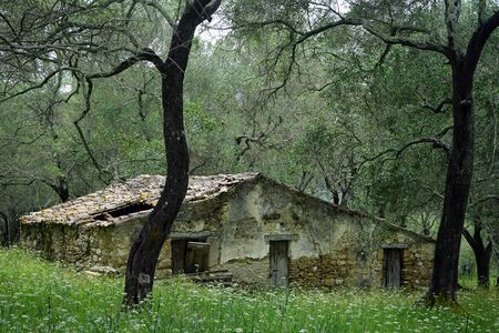 Abandoned farmhouse in olive grove in Corfu, Greece 스톡 콘텐츠