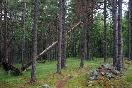 Footpath in forest in Norway Stockfoto