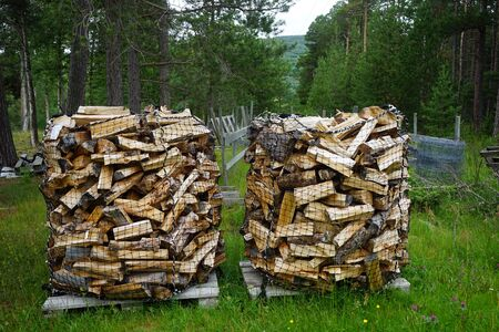 Heaps of firewood in the forest in Norway