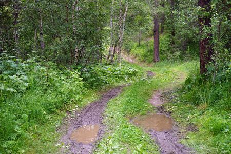 Dirt track with water pools in forest in Norway