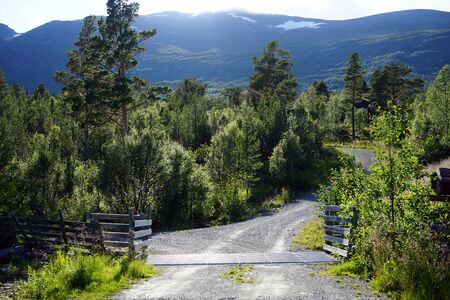 Dirt road in forest in Norway