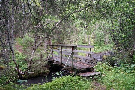 Wooden bridge in the dense forest in Norway Stockfoto
