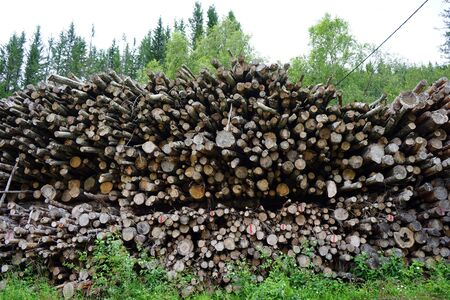 Heap of logs in the forest in Norway 写真素材