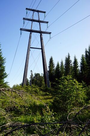 Electric pillar and wire in the forest in Norway