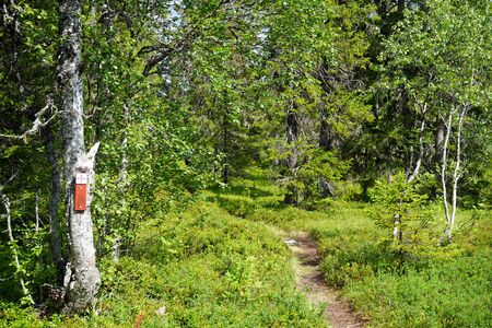Saint Olav trail in the forest in Norway Stockfoto