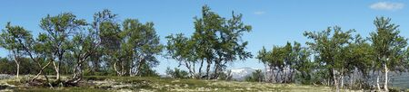 Panorama of trees in Dovre national park in Norway Stockfoto