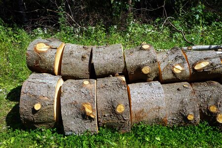 Firewood in forest 写真素材