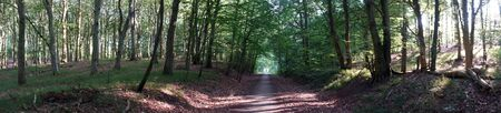 Panorama of footpath in forest in Denmark