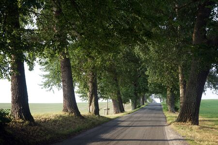 Road with tree in Denmark