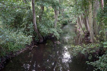 Calm river in dense forest in Denmark