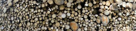 Panorama of heap of logs in the forest
