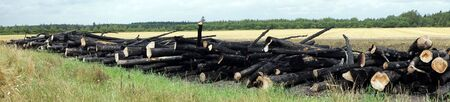 Firewood on the green grass