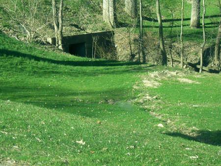 緑の草に覆われた道