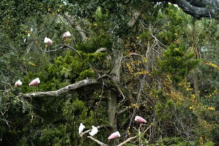 Various Birds Waiting in a Tree Stok Fotoğraf
