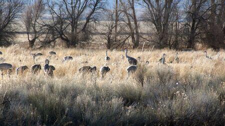 storks in grass