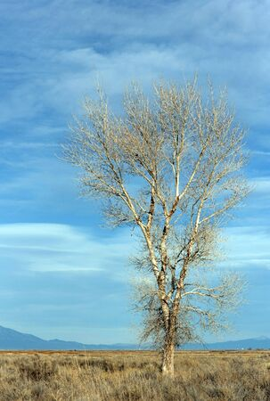 A classically wild tree on a simple background.