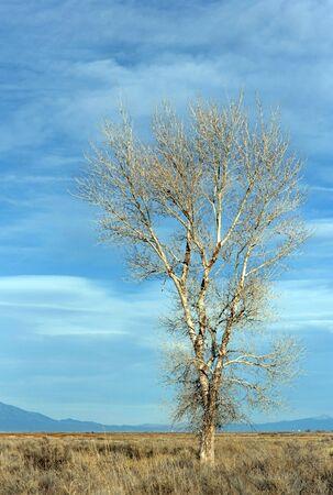 Klasycznie, dziki, drzewo na prostym tle. Zdjęcie Seryjne