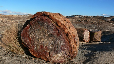 Petrified tree Landscape of the ancient petrified forest in Arizona photo
