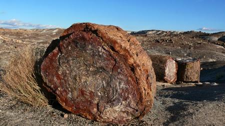 Skamieniałe drzewo  Krajobraz starodrzew skamieniałego w Arizonie