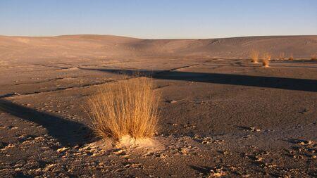 Piękny krajobraz złotej trawie żyć na jałowej pustyni w późnym popołudniem.