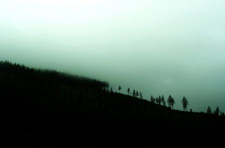 Mglisty poranek valley  Drzewa, las i góry we mgle rano