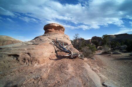 Ciepło - drzewo susza i suche skały Zdjęcie Seryjne