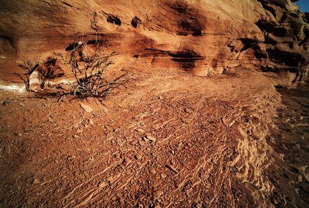 Heat - drought tree and dry rocks Stock Photo