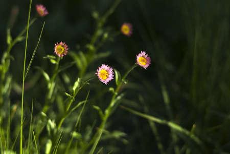 Wild flower meadow in Mount Rainier National Park in summer.