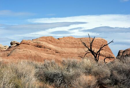 desertification: Heat - drought tree and dry rocks  Drought tree survive in front of rocks of petrified trees.