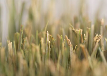 Dry and yellow bush of wheat grass.