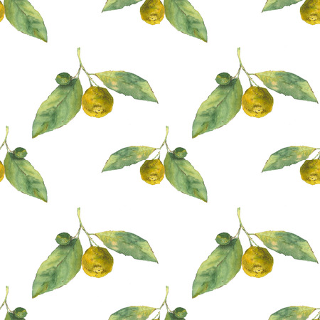 Clementines. Citrus on white background. Seamless watercolor pattern. Could be used for textile or in design Stock Photo