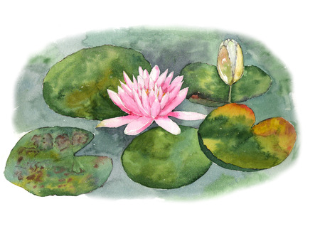 Botanical watercolor illustration of water lilies in the pond on white background. Could be used as decoration for web design, cosmetics design, package, textile