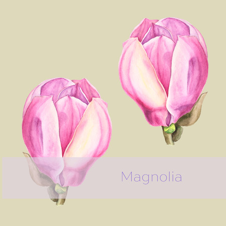 hues: Botanical watercolor illustration of tender pink magnolia flowers on light olive background with text