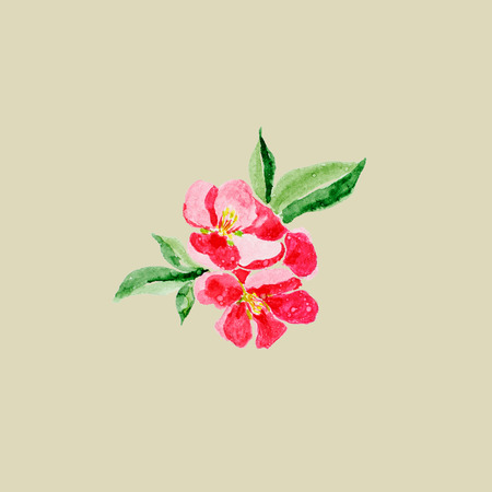Japanese style. Botanical watercolor illustration of Red quince flower in blossom isolated on olive background with description