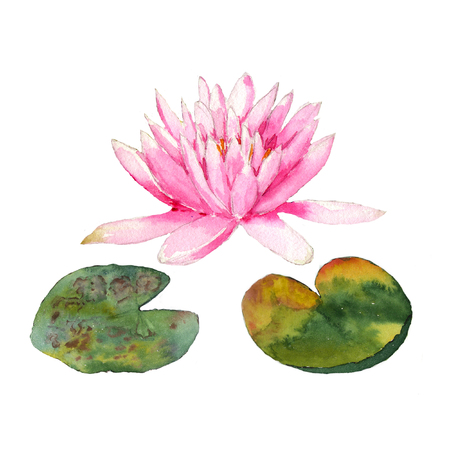 Botanical watercolor illustration of water lilies in the pond on white background Stock Photo